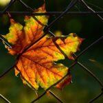 Rete per recinzione