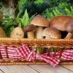 Balla di funghi