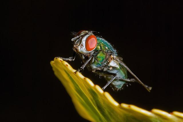 Trappola per mosche